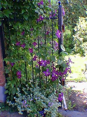 Jan S Garden 03